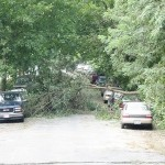 Fallen tree on Brandywine