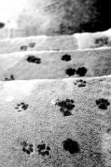 Kitty prints