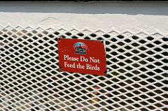 Please Do Not Feed the Birds
