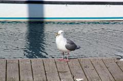 Just a gull